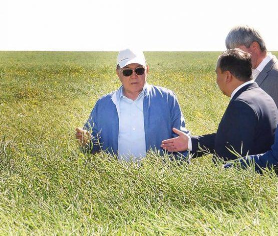 Нұрсұлтан Назарбаев: Егін ору жұмыстарын жеделдету керек