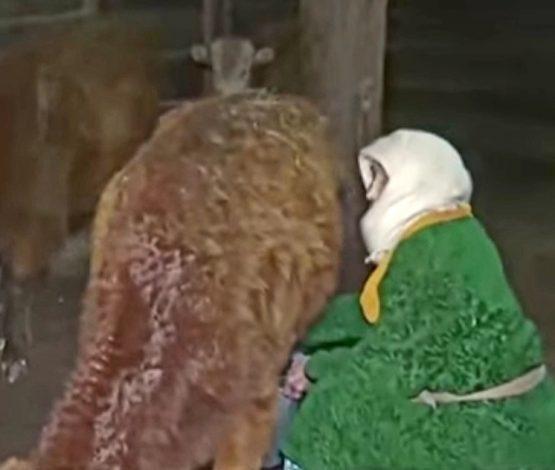 111 жасында сиыр мен бие сауып жүрген қарағандылық әжеге ел сүйсінді