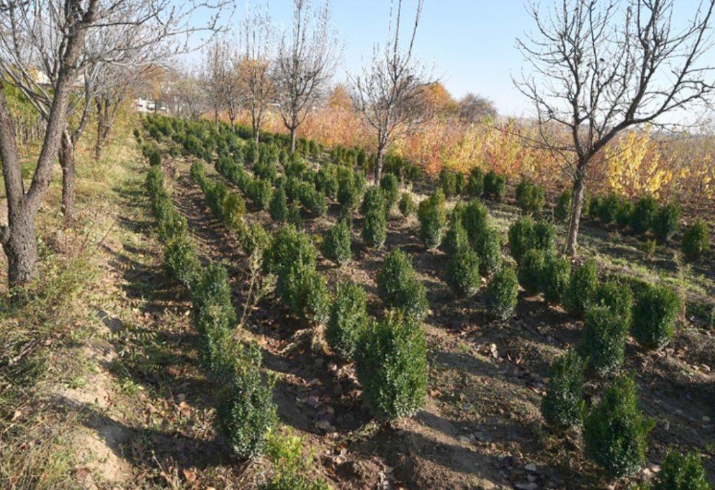 Елімізде 2 млрд түп ағаш үшін 80 миллиард теңге бөлінеді